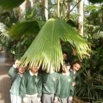 Kew Gardens KF (33)
